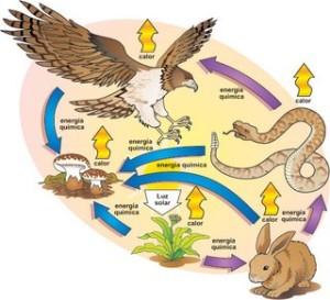 La cadena alimentaria mantiene el balance de energía en la naturaleza. Los vegetales producen lo que los animales requerimos y viceversa