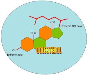 estructura-colesterol