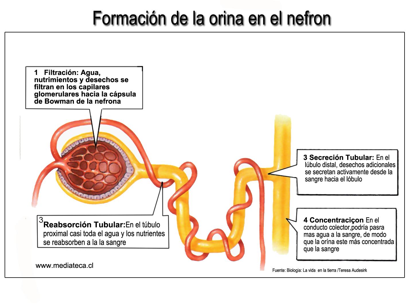 como se hace la tecnica de gota gruesa cristales acido urico ph cuales son los niveles normales de acido urico en el organismo humano