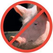 A pesar que el cerdo tiene pezuña partida, no rumia por lo que su carne no está permitida en la cultura Kosher