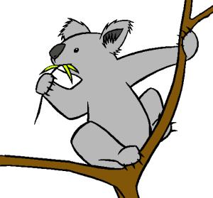 koala-dibujo