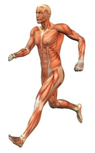 muscle_man_running