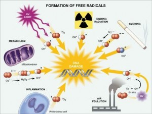 radicales-libres-3
